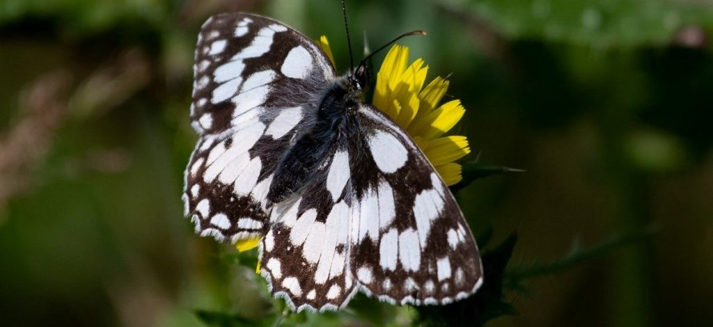 marbled-white inspiration for latest Boutique Narrowboat